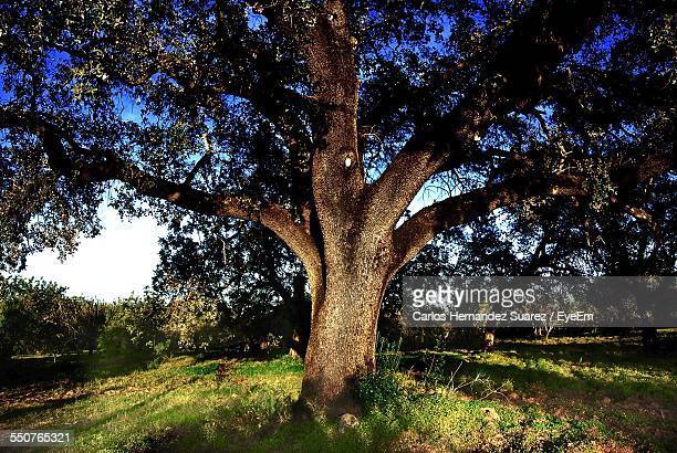 view of trees on landscape - suarez stock pictures, royalty-free photos & images