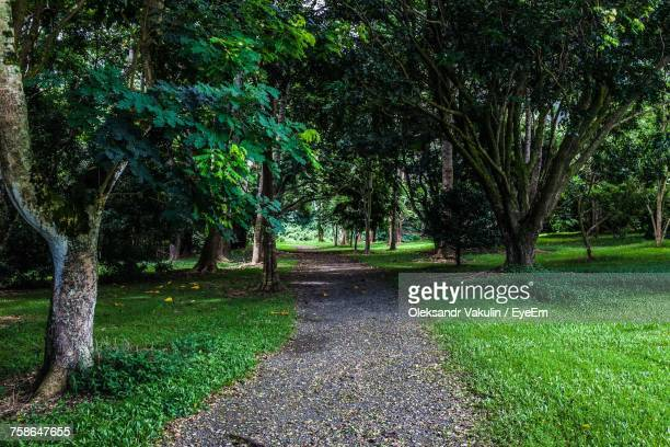 view of trees on landscape - oleksandr vakulin stock pictures, royalty-free photos & images