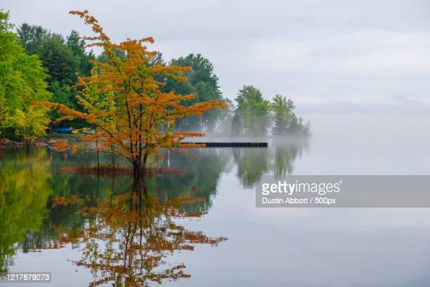 view of trees reflected in lake in foggy day, canada - dustin abbott imagens e fotografias de stock