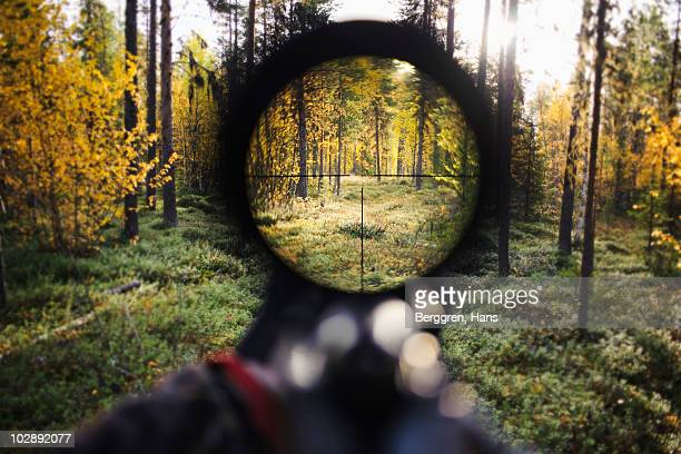 view of trees through rifle sight - sportschießen stock-fotos und bilder