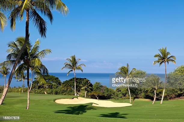 tropical campo de golfe - maui - fotografias e filmes do acervo
