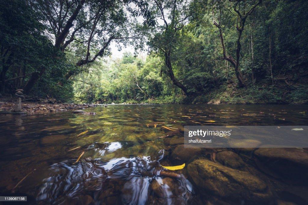 View of tropical rain forest landscape at Taman Negara, Pahang, Malaysia. : Stock Photo