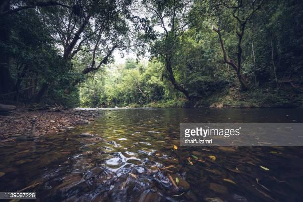 view of tropical rain forest landscape at taman negara, pahang, malaysia. - shaifulzamri bildbanksfoton och bilder