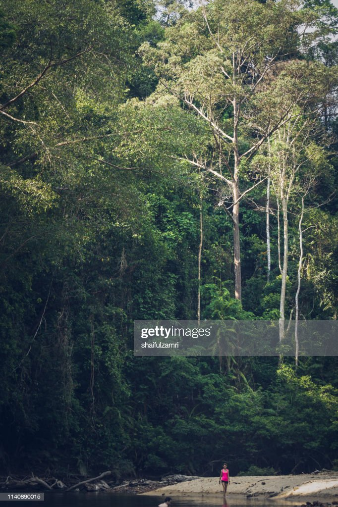 View of tropical rain forest landscape at Taman Negara, Pahang, Malaysia. : Stock Photo