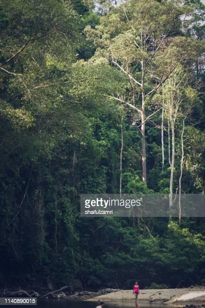 view of tropical rain forest landscape at taman negara, pahang, malaysia. - shaifulzamri stock-fotos und bilder