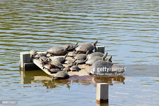view of turtles - eileen kirsch stock pictures, royalty-free photos & images