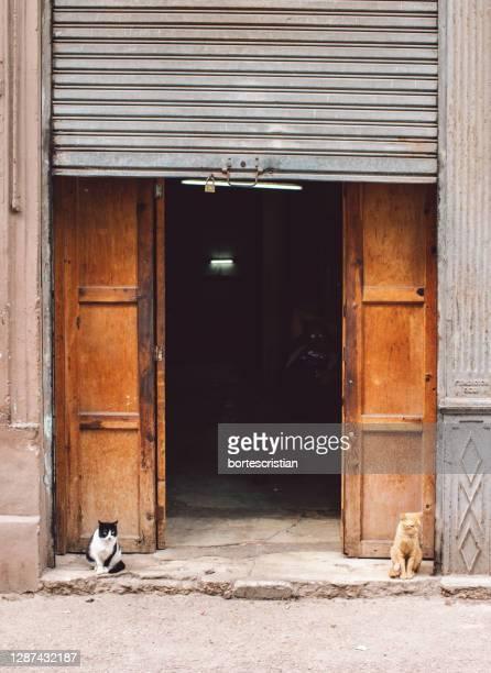 view of two cats in front of building - bortes stockfoto's en -beelden
