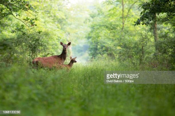 View of two deer in forest