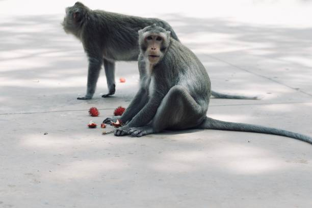View of two monkeys
