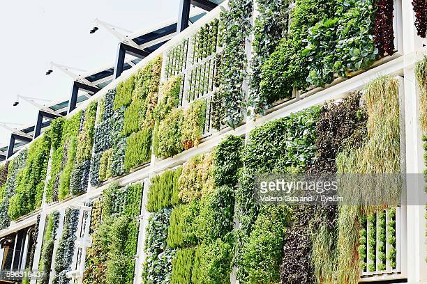 view of vertical garden - botany stock pictures, royalty-free photos & images