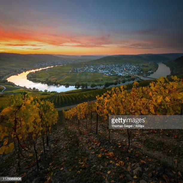 View of vineyard at sunset