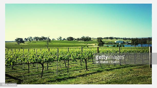 View Of Vineyard