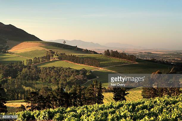 View of vineyards at sunset, Stellenbosch, Western Cape Province, South Africa