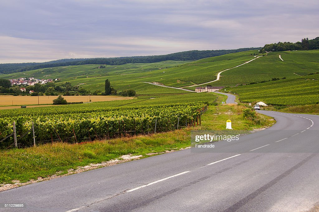 View of vineyards in Epernay France : Stock Photo