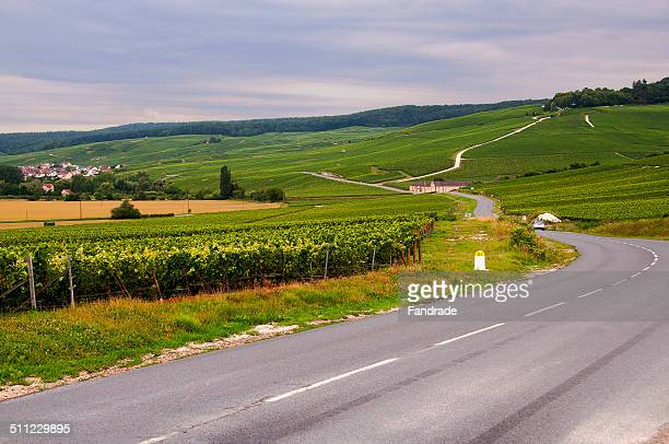 View of vineyards in Epernay France