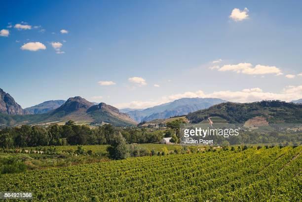 View of Vineyards of Franschhoek