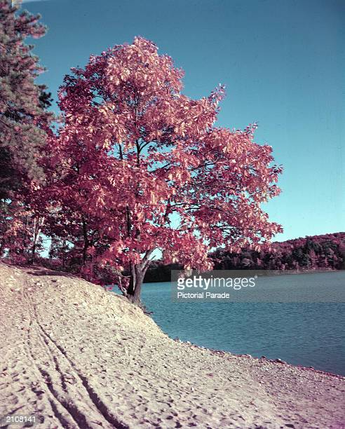 View of Walden Pond Concord Massachusetts undated