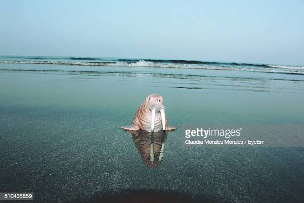 view of walrus miniature on calm beach against clear sky - walrus stock photos and pictures