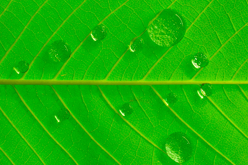 View of water drop on green leaf - gettyimageskorea