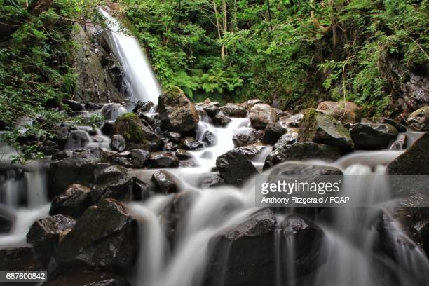 View of waterfall and stream in forest