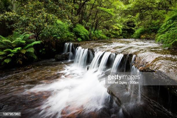 view of waterfall in forest - brook mitchell bildbanksfoton och bilder