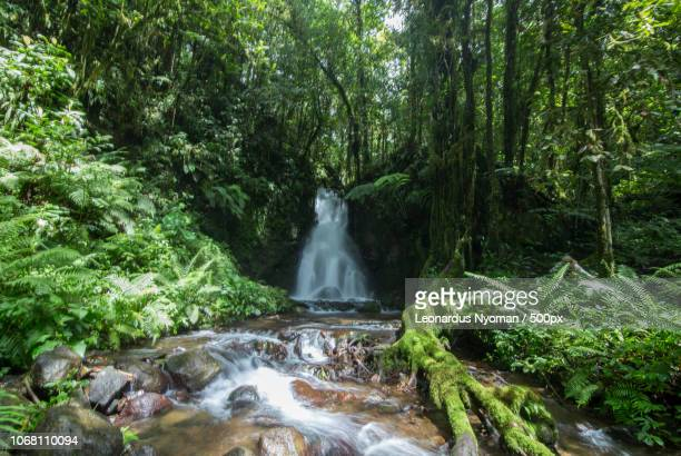 view of waterfall in forest - east nusa tenggara stock pictures, royalty-free photos & images
