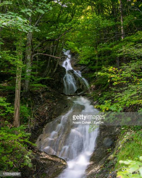 view of waterfall in forest - bad ragaz stock pictures, royalty-free photos & images