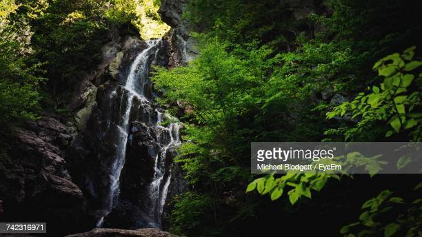 view of waterfall in forest - michael blodgett stock pictures, royalty-free photos & images