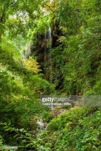 view of waterfall in forest, san saba, usa - san saba polo team stock pictures, royalty-free photos & images