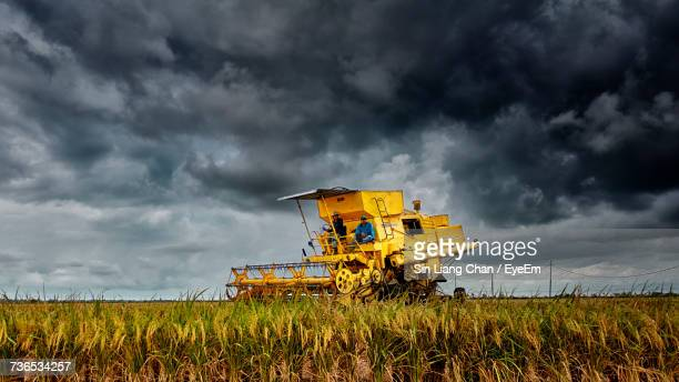 View Of Wheat In Field Against Cloudy Sky