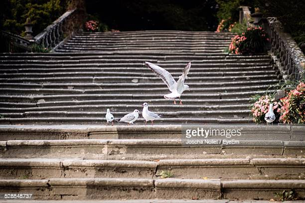 View Of White Birds On Steps