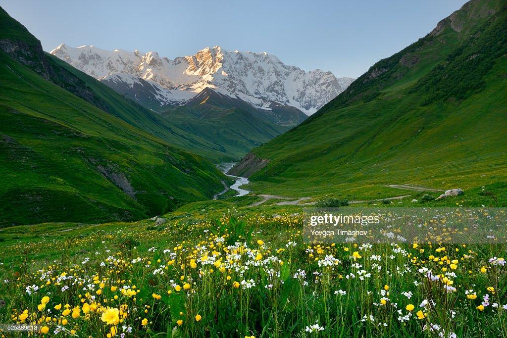 View of wildflower meadow and Shkhara mountain, Ushguli village, Svaneti, Georgia : Stock Photo