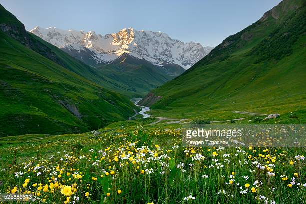 View of wildflower meadow and Shkhara mountain, Ushguli village, Svaneti, Georgia