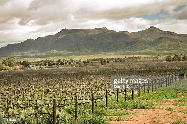 View of winter vineyards with hills in the background, R62 Wine Route, Robertson, Western Cape Province, South Africa