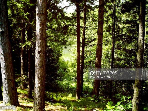 view of wisconsin forest - staadts,_wisconsin stock pictures, royalty-free photos & images