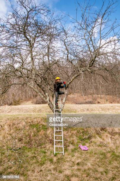 View Of Woman Pruning Tree
