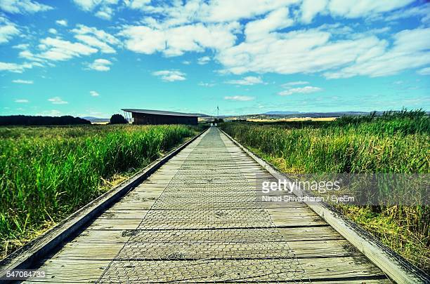 view of wooden boardwalk - launceston australia stock pictures, royalty-free photos & images