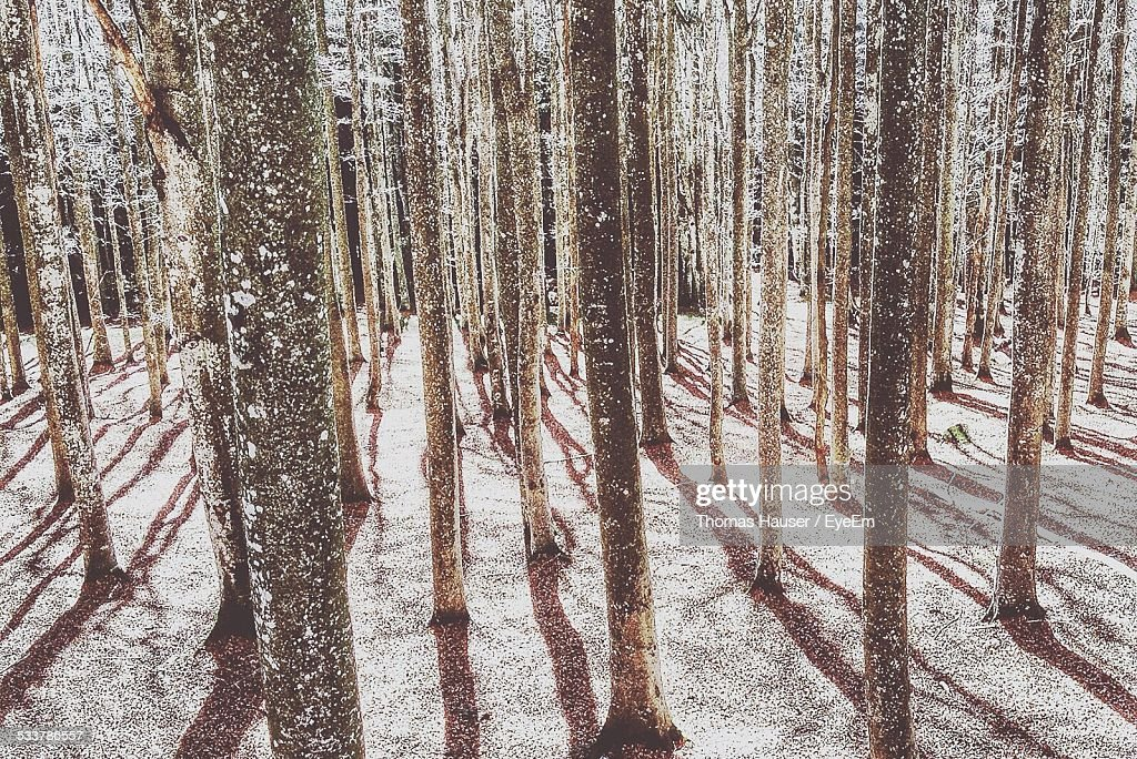 View Of Woodland In Winter : Foto stock