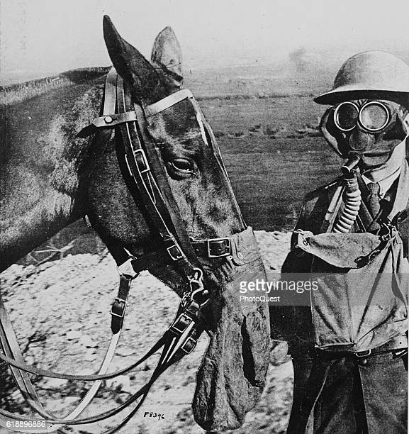View of World War Iera gas masks worn by a horse and a soldier to protect them from mustard gas attacks France 1918