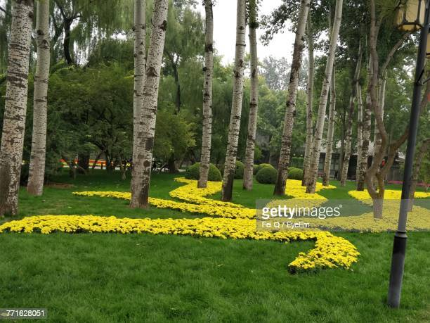 view of yellow flowers on grass - daffodils stock photos and pictures