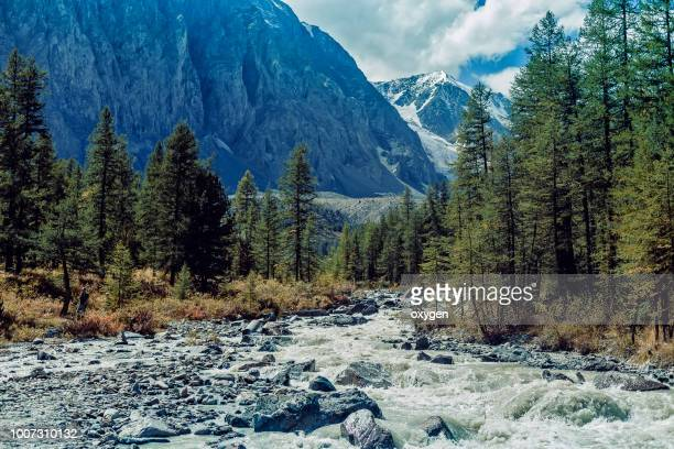 view on aktru river, karatash peak and aktru glacier. altai republic. russia - nature reserve stock pictures, royalty-free photos & images