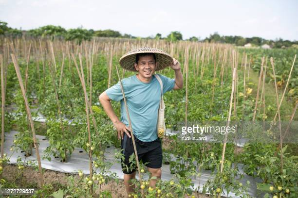 view on asian man on chili field - printed sleeve stock pictures, royalty-free photos & images