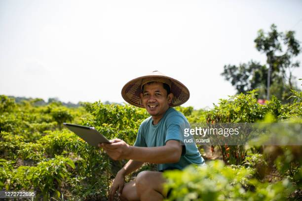 view on asian man using digital tablet on chili field - indonesia stock pictures, royalty-free photos & images