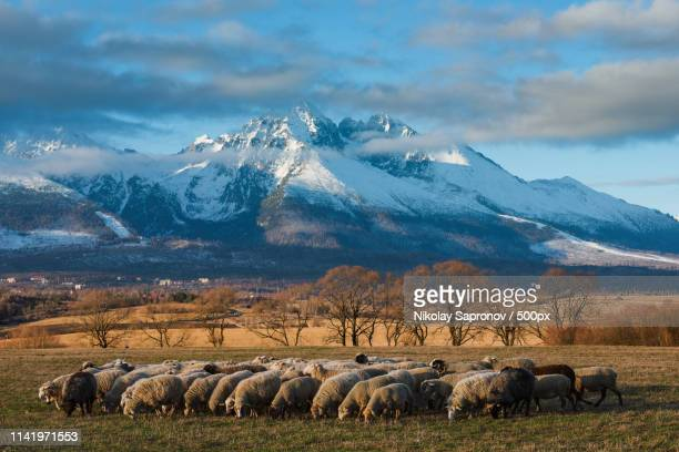 view on high tatras from poprad valley - slovakia stock pictures, royalty-free photos & images