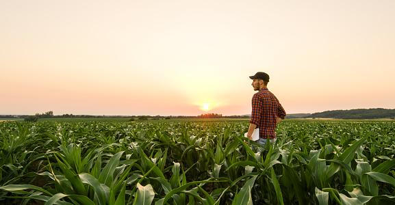 View on man on corn field 1094814114