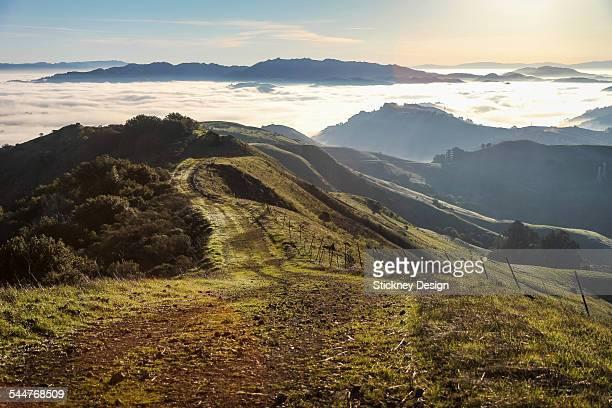view on oakland park hiking path in forest fog - oakland califórnia - fotografias e filmes do acervo
