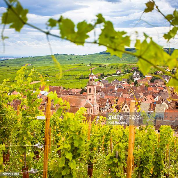 View on Riquewihr from a vineyard