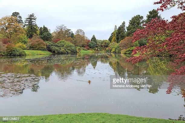 view on ten foot pond, sheffield park, sussex, uk - arboreto foto e immagini stock