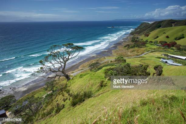 view on the mangawhai cliffs walkway in northland looking south - northland new zealand stock pictures, royalty-free photos & images
