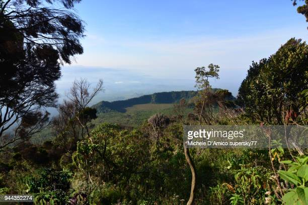 view on the volcanic landscapes of the virunga mountains through afroalpine vegetation - virunga national park stock pictures, royalty-free photos & images